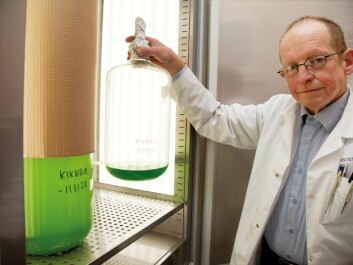 Professor Dag Klaveness has spent the last 40 years specialising in breeding micro-organisms. Large quantities are required to analyse the genes. (Photo: Yngve Vogt)