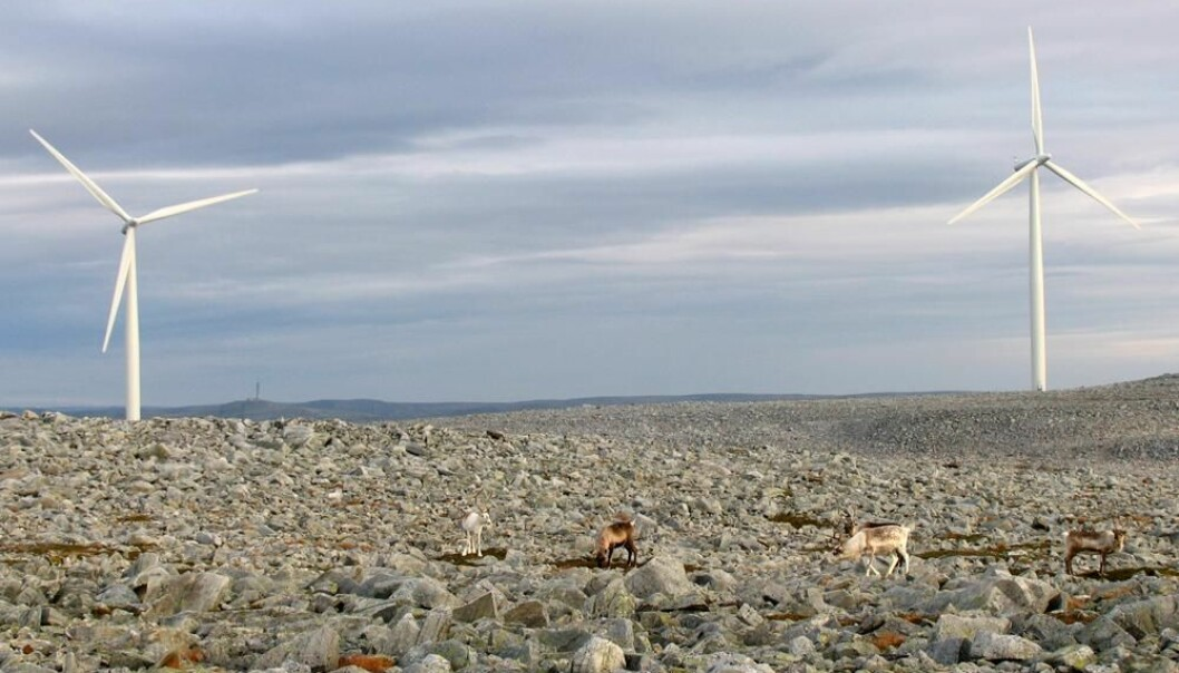 Reindeer are not frightened by windmills on Dyfjord peninsula in Finnmark, according to new research. (Photo: Jonathan Colman)