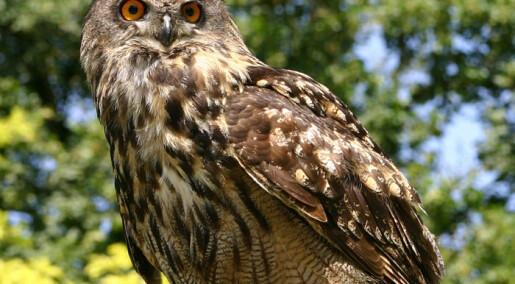 Birds of prey hit by rat poison