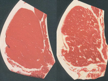 At left a lean cut of steak, on the right the same cut with much more intramuscular fat, or marbling. (Photo: US Dept. of Agriculture)
