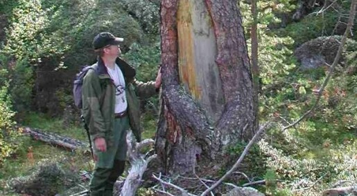 Mystical marks in virgin forest explained