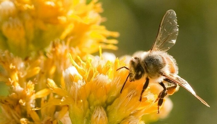 Sugar shock for busy bees