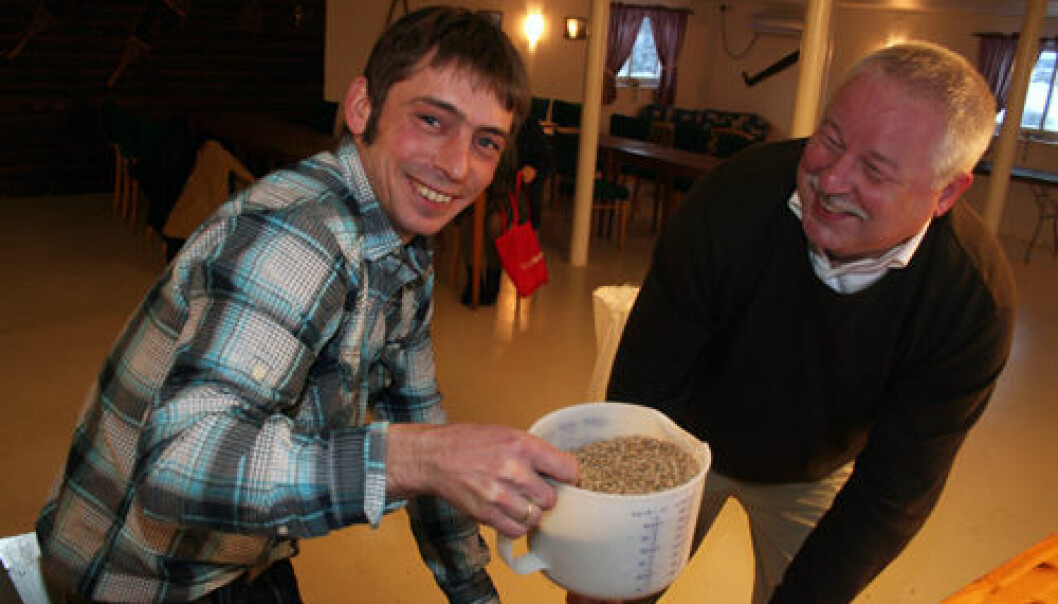 Jørn Kragtorp (left) and Manfred Heun brew beer from the primitive wheat known as einkorn. Here they are adding a malt of einkorn, ready to start the brewing process. (Photo: Asle Rønning)