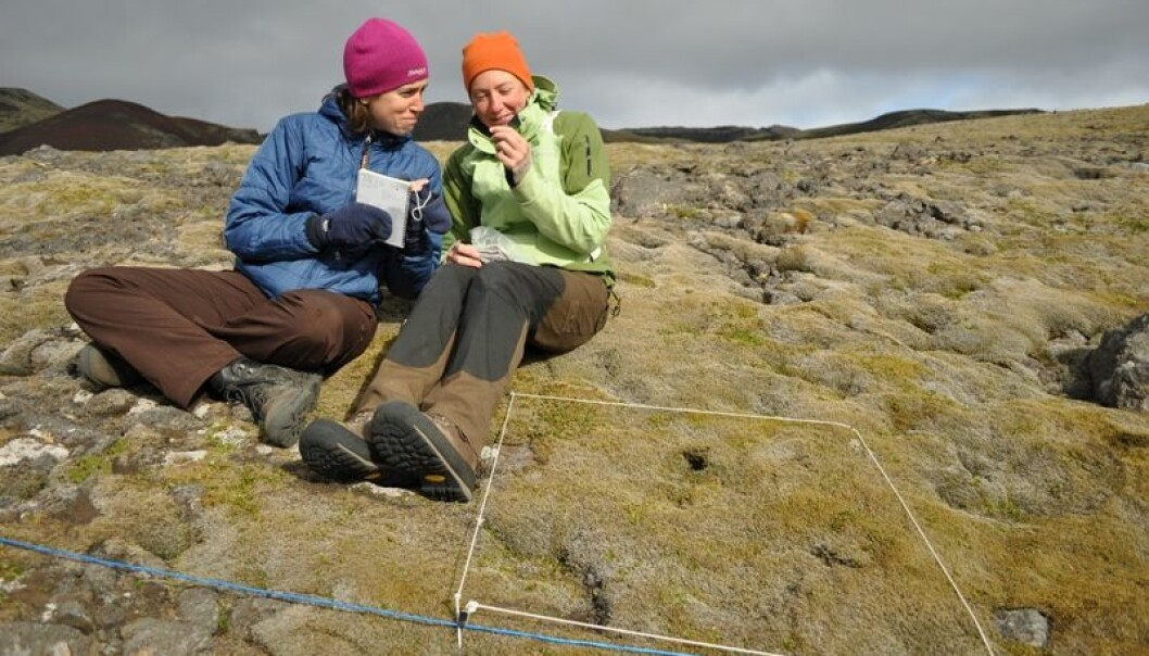 Elisabeth Maquart from France and Brooke Wilkerson from the US were Jutta Kapfer's field assistants on the Norwegian island Jan Mayen. Here they have delineated a small area for a phytosociological study. (Photo: Jutta Kapfer)