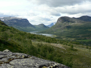 Sikkilsdalen is a valley in the eastern part of Jotunheimen, a mountainous area of roughly 3,500 km². Sikkilsdalen is used as grazing land for horses in the summer. (Photo: Jutta Kapfer)