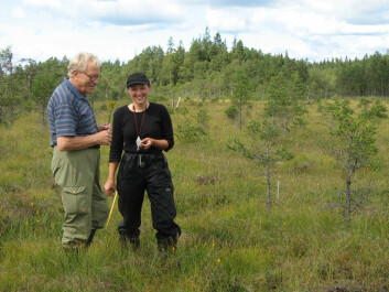 Jutta and her assistants at work on a sunny day in the Åkhultmyren. A man came by and asked what they were up to. They explained they were re-sampling a study by Nils Malmer from the 1950s to check for changes in vegetation. He then revealed he was Nils Malmer, visiting the bog along with his wife and grandchildren. Here he is pictured with Jutta Kapfer. (Photo: Jessica Abbott)