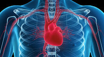Longer heartbeats could shorten lives