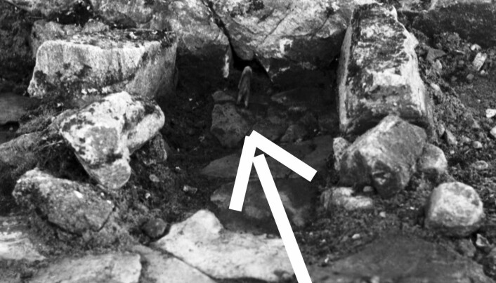 Mysterious bear figurines baffle archaeologists