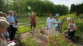 A living rose museum