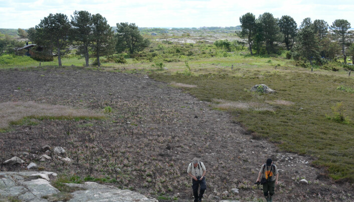 The Viking landscape – an endangered habitat