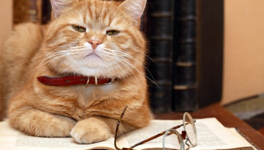 How well-informed is Felis domesticus? (Photo: Colourbox)