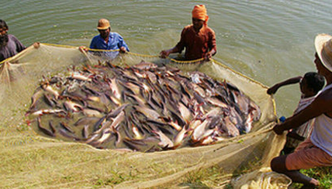 Indian fish farmers. (Photo: Nofima)