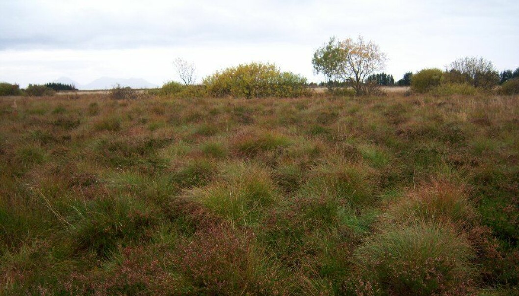 This bog was last cultivated 30 years ago and is now almost restored to natural wetlands. Researchers suggest giving nature a boost to curb climate emissions. (Photo: Arne Grønlund)
