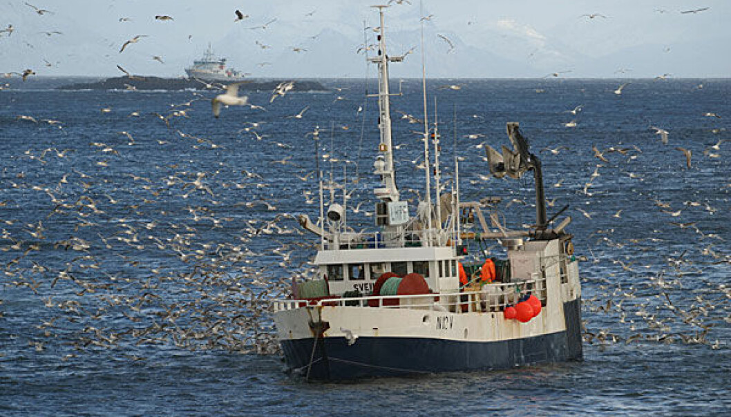 Where does the fish come from and what happens between the fishing boat and the supermarket counter (Photo: Frank Gregersen)