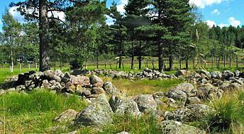 Norwegian Vikings grew hemp