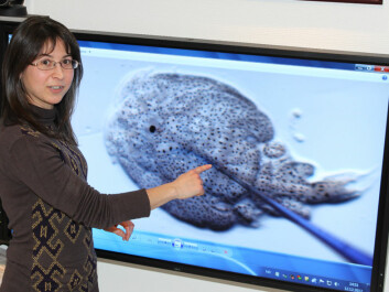 Celia Agusti-Ridaura explains how to extract molecules from salmon lice and use of the vaccine. (Photo: Mari M. Press)
