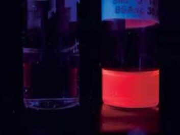 The nanogold in the protein mixture makes them glow when illuminated with UV-light. Gold's strong optical properties mean that researchers can follow the drug as it moves through the body. (Photo: Dept. of Chemical Engineering)