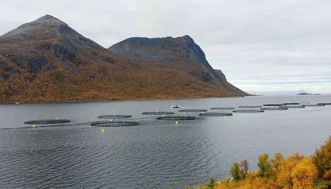 Wilsgård fiskeoppdrett AS, Torsken. (Photo: Roy Robertsen)