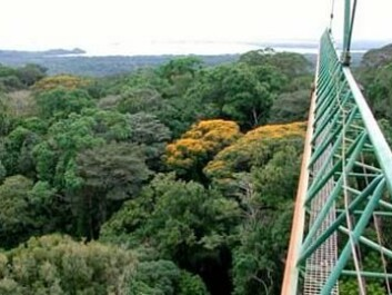 The rainforest studied from a crane. (Photo: IBISCA/J. Schmidl)
