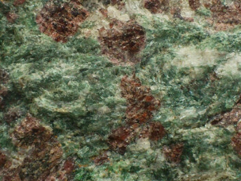 The translucent red garnets and green omphacite make a striking combination in eclogite. (Photo: Andreas R. Graven)