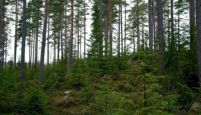 Reindeer thrive on forest diversity