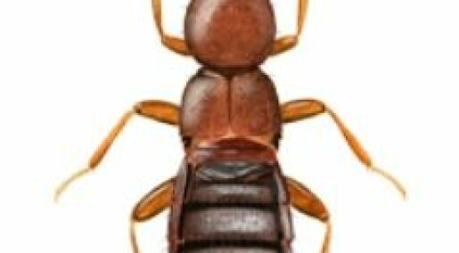 The evolving life of East African beetles