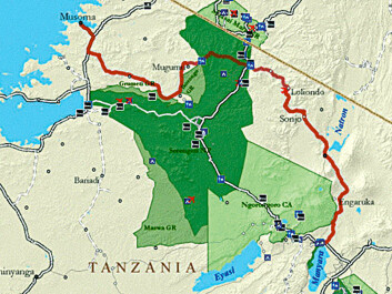 The northern tier road would help take pressure off of Serengeti National Park's main road, which passes through wildebeest calving areas in the centre of the park. (Map: African Wildlife Foundation)