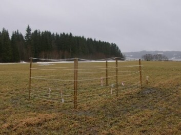 Grazing cages used in the project. (Photo: Jarle W. Bjerke)