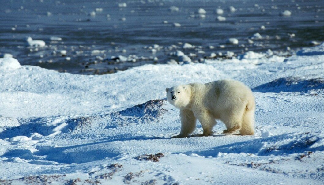 There is less sea ice in the Arctic Ocean now than ever recorded before. (Photo: Colourbox)