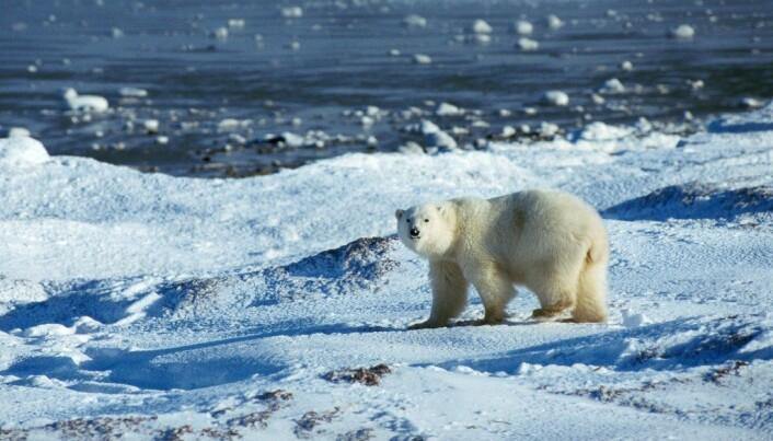 Colder Nordic winters due to icefree Arctic Ocean?
