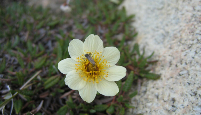 Climate change eats up Arctic insect life
