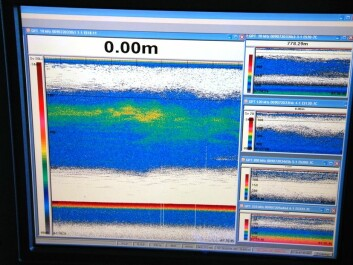 The echo sounder's signals detect sea life beneath the ship. Green indicates a higher density than blue and yellow reveals a higher density than green. (Photo: Hanne Østli Jakobsen)
