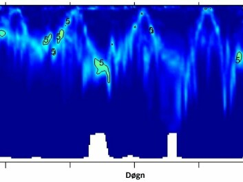 The vertical axis shows depth in metres, with 24-hour increments on the horizontal. Krill sink down during the day and rise to the surface at night. The bioacoustical imaging of this migration forms waves. The white section at the bottom, at depths of 800-900 metres, is the seabed. (Photo: Peter Wiebe)