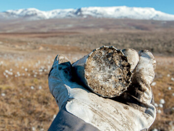 A core sample of permafrost with a large ice component, taken at Zackenberg, Greenland. (Photo: Bo Elberling, CENPERM, University of Copenhagen)