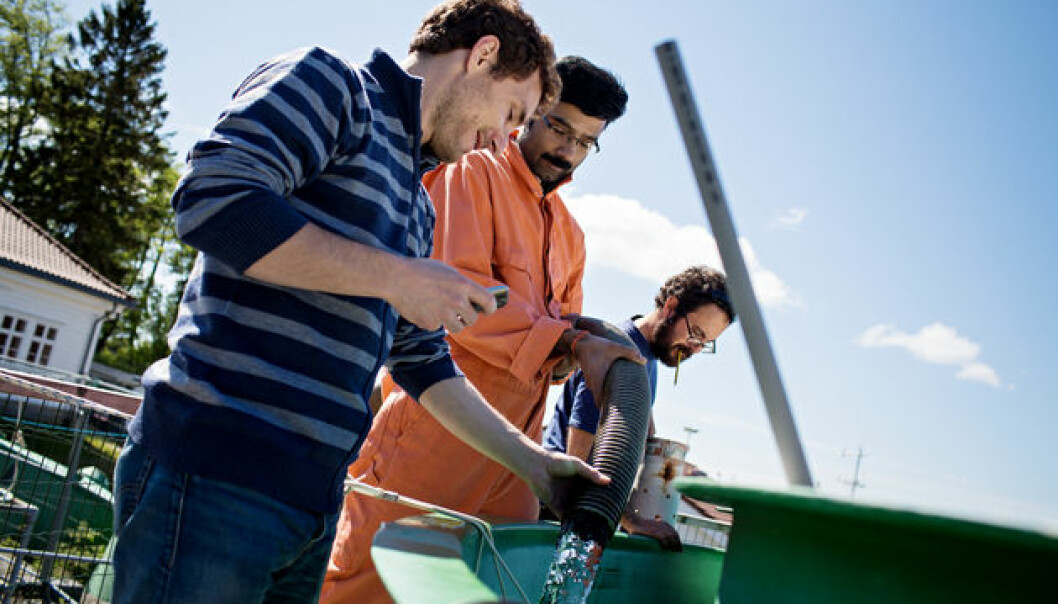 In these tanks at Espegrend outside Bergen viruses, bacteria and plankton grow, eat each other and die, within three weeks. Postdoctoral fellows Antonio Pagarete, Rakhesh Madhusoodhanan and Paolo Simonelli fill the tanks with water from the outside bay. (Photo: Eivind Senneset)