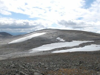 The snowdrift glacier at Dovrefjell, where Palaeolithic arrows have been found. (Photo: Martin Callanan, NTNU)