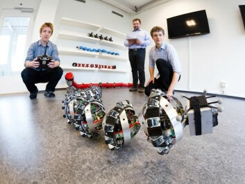 SINTEF researchers Pål Liljebäck and Aksel Transeth, and Knut Robert Fossum of NTNU's CIRiS, which is a partner in the project, playing with Wheeko the snake robot. (Photo. SINTEF/Thor Nielsen)
