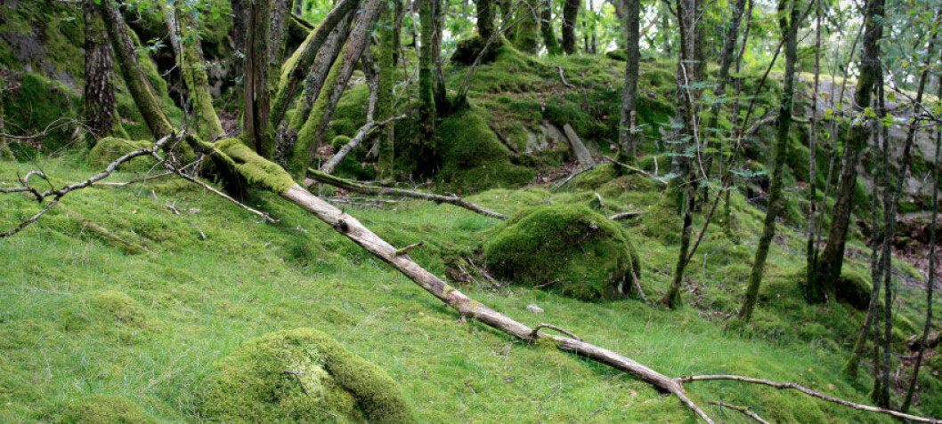 Wood fuels far less climate friendly than assumed