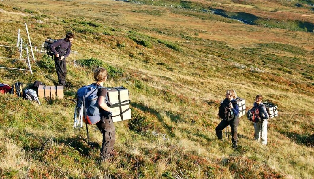 Students and researchers took several hundred little turf ecosystems and moved them to new sites. Each consisted of an average of 21 different plant species. (Photo: Vigdis Vandvik)