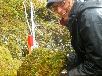 Professor Vigdis Vandvik of the University of Bergen's Ecological & Environmental Change Research Group led the experiment on Norway's west coast. She and her team selected spots where temperatures and average amounts of precipitation vary significantly. (Photo: Kari Klanderud)