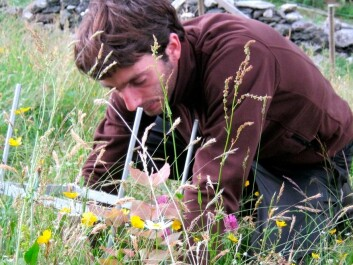 A student on his knees, measuring and counting what has happened to plants in the ecosystem, three years after being moved to a new site. (Photo: Vigdis Vandvik)