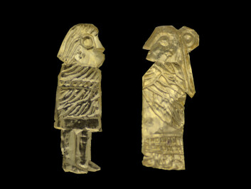 Archaeologists have found 29 of these little gold men in Västra Vån, Blekinge, to date – the third biggest discovery of its type in Sweden. The figurines are typically only 1-2 centimetres tall. (Photo: Max Jahrehorn, Blekinge Museum)
