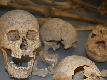 A grave for 54 executed Scandinavians testifies to a disastrous Viking raid in England, circa 1000 AD. (Photo: Ida Kvittingen)