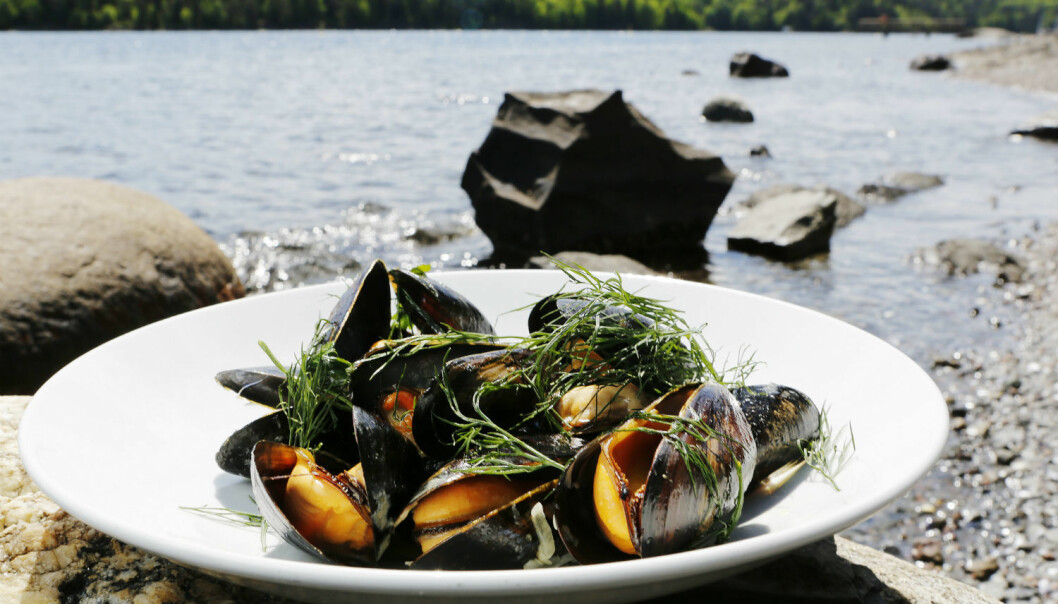 Many regard mussels as a delicacy. Researchers have found a simpler way of testing whether they are poisonous. (Photo: Magnar Kirknes, VG)