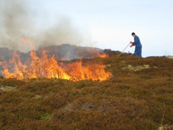 Controlled heather burning in Norway. (Photo:Liv Guri Velle)