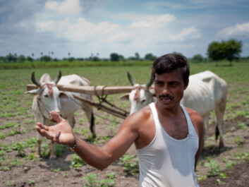 A farmer in Andhra Pradesh waits for the rain. His cotton field is dry due to delayed monsoon. (Photo: Ragnar Våga Pedersen)