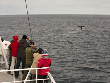 Out in the fresh salty air, seeing and hearing a whale in its natural marine element is something else than watching one on TV. (Photo: Hvalsafari AS)
