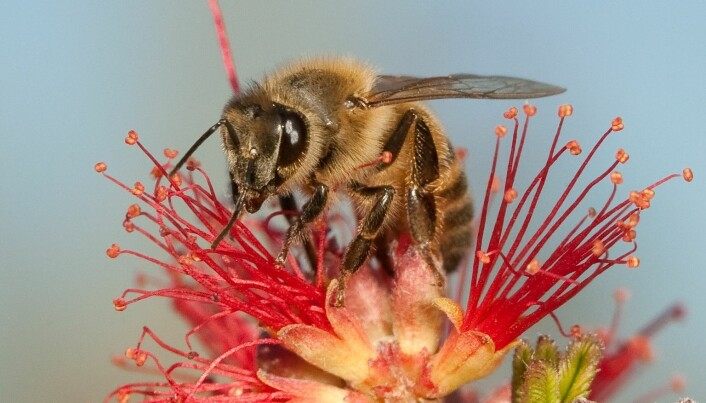 Honey bee mystery protein is a freight train for health and lifespan