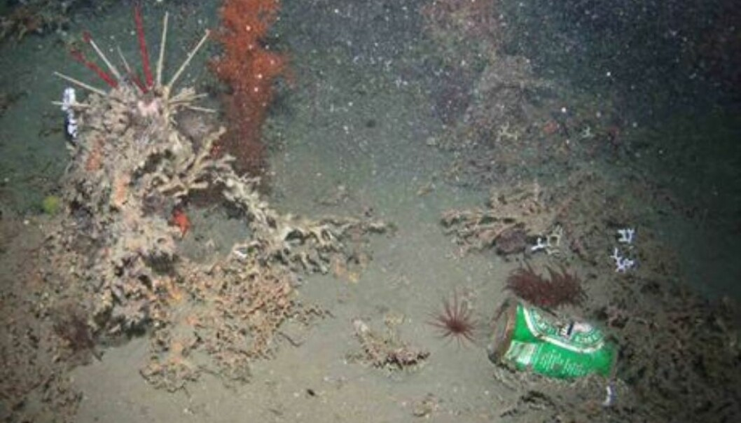 A beer can at 950 meters depth. (Foto: Hermione Project/Plymouth University)