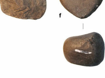 Neolithic human-made stone hammering tools found in Gona, Etiopia. (Photo: Elsevier)